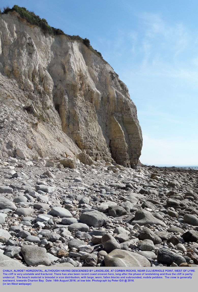 Chalk which has descended by landslide from high in the Undercliff region, now being eroded by the sea at Corbin Rocks, the Undercliff, west of Lyme Regis, Dorset, photograph by Peter Gill, August 2016
