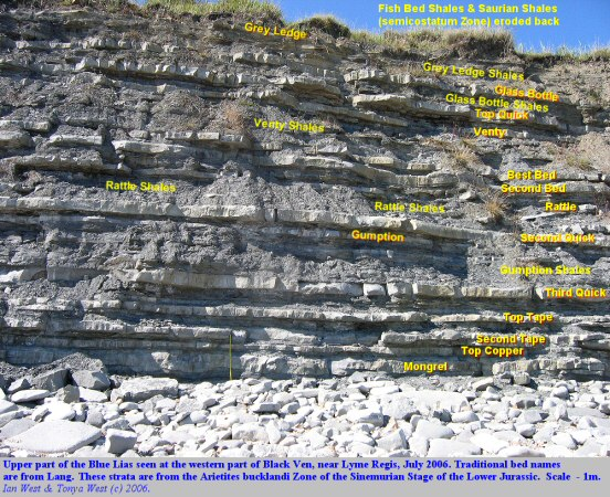 Labelled photograph of beds in the upper part of the Blue Lias, at thw western end of Black Ven, near Lyme Regis, Dorset