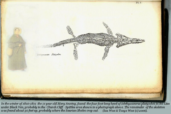 Ichthyosaurus platyodon, from Lyme Regis, Dorset; specimen of Hawkins; after Buckland, 1837