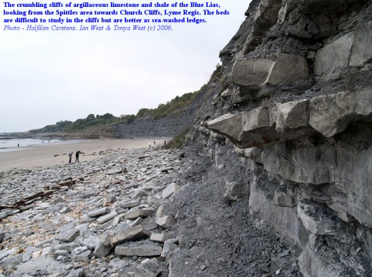 Crumbling cliffs of argillaceous limestone and shale, looking towards Church Cliffs, Lyme Regis, Dorset
