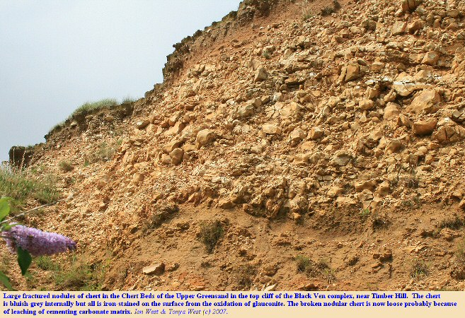 The Chert Beds at the top of the Upper Greensand near Timber Hill, Lyme Regis, Dorset