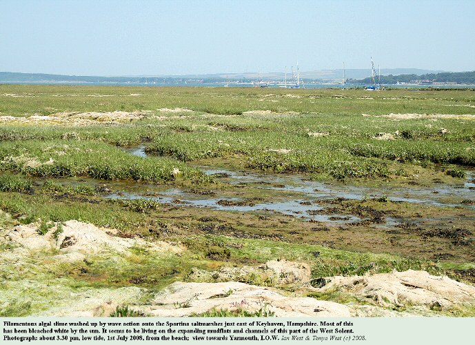Filamentous algae has been washed up by wave action onto the Spartina saltmarshes of Keyhaven, Hampshire, 1st July 2008