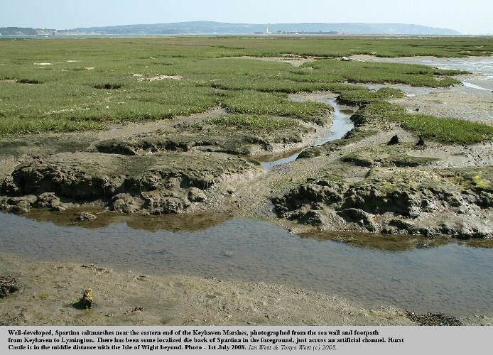 Well-developed, Spartina saltmarshes at the eastern end of the Keyhaven Marshes, with some localised die-back in the foreground, 1st July 2008