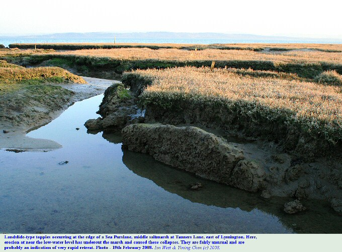 Landslide-type topples occurring at the rapidly eroding edge of a saltmarsh at Tanners Lane, east of Lymington, Hampshire, 19th February 2008