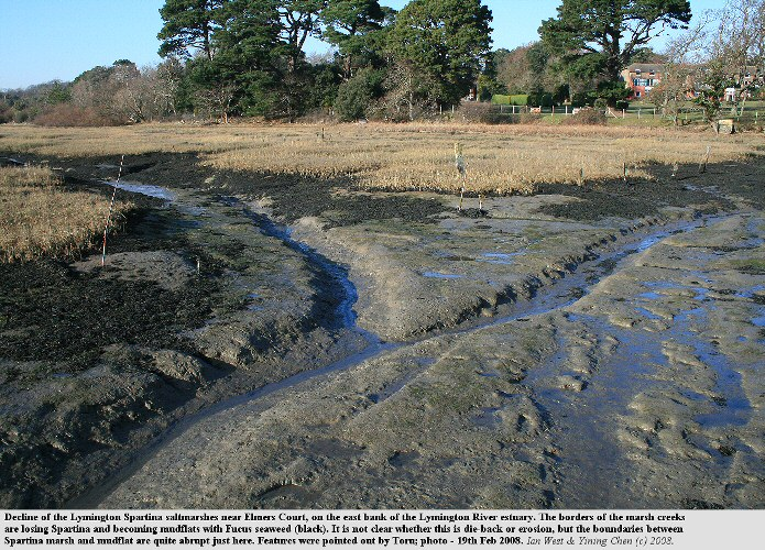 Expansion of mudflats at the expense of Spartina saltmarsh , near Elmers Court, Lymington, Hampshire, 18th February 2008