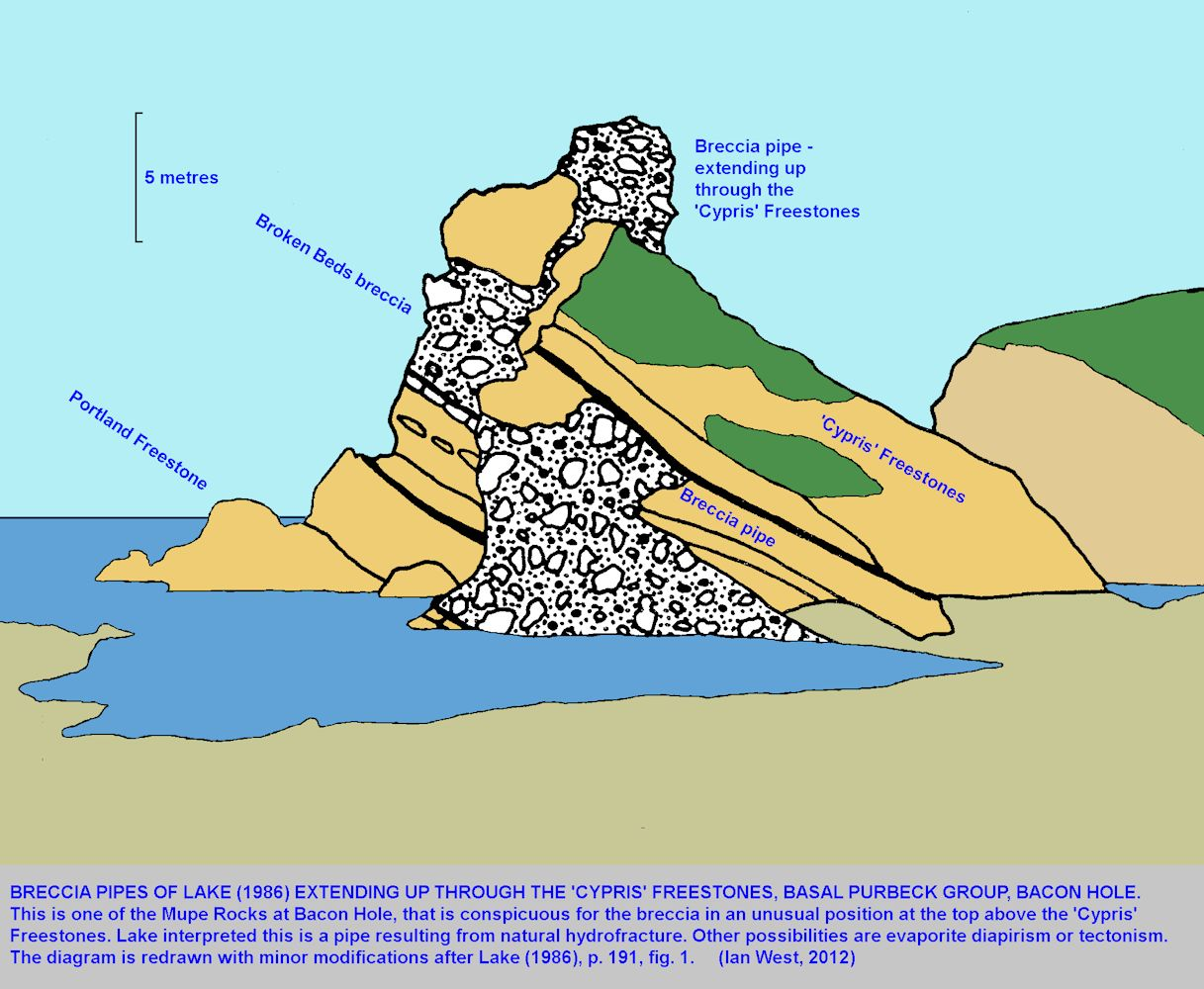 A diagram, based on Lake (1986), showing a supposed breccia pipe extending up from the Broken Beds through and above part of the Cypris Freestones, one of the Mupe Rocks, Bacon Hole, Dorset