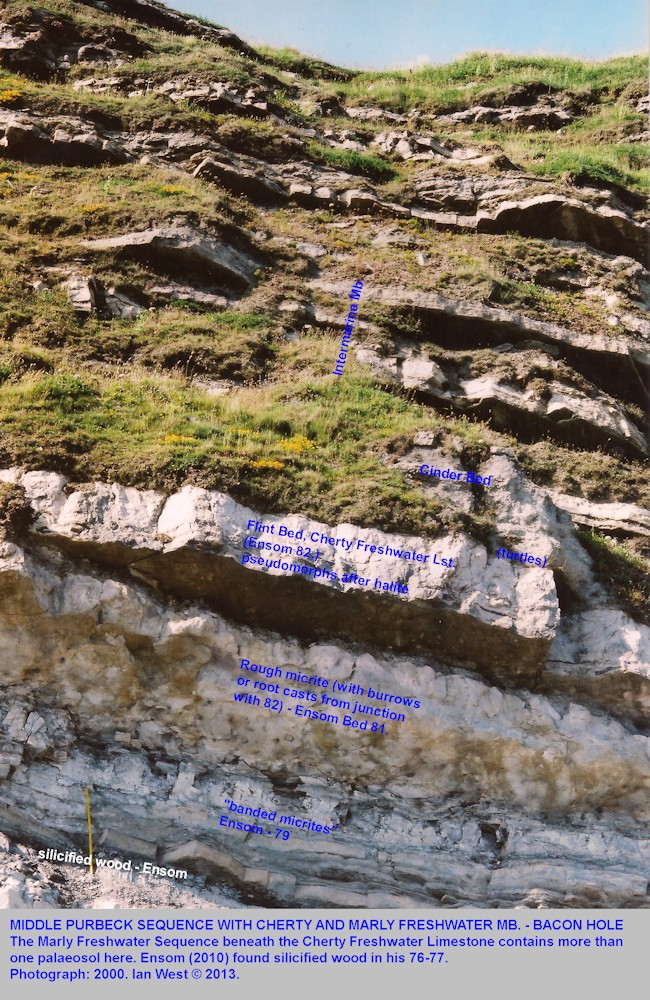 The vertical sequences, with the Cherty Freshwater Limestone, at the top of the Lulworth Formation, Purbeck Group, Bacon Hole, Mupe Bay, Dorset