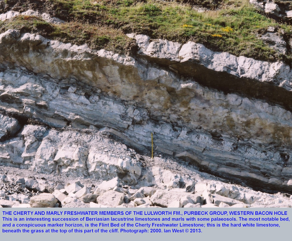 The Cherty Freshwater Member above Marly Freshwater Member of the Lulworth Formation, Purbeck Group, at the western end of Bacon Hole, Mupe Bay, Dorset, 2000