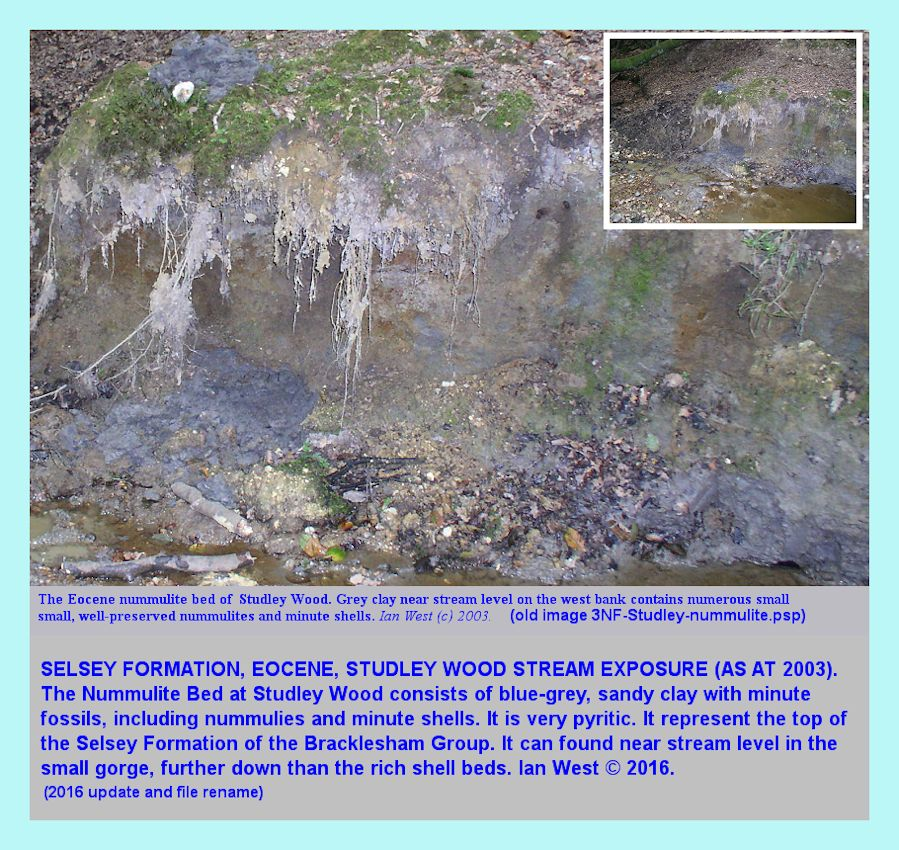 The Selsey Formation, Nummulite Bed, a grey sandy clay near stream level, bed SW1b, Studley Wood, New Forest, an old photograph taken in 2003