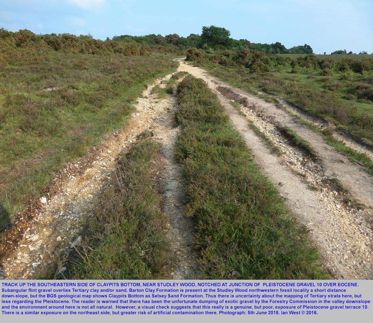 A path up the southeast side of Claypits Bottom, near Studley Wood, New Forest National Park, crosses from Tertiary, downslope, up onto high Pleistocene gravel terrace 10.
