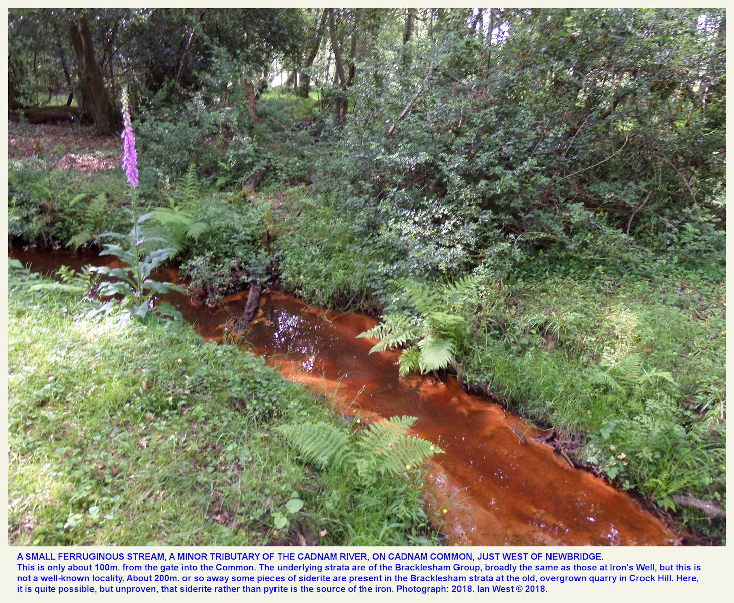 An iron-rich stream near Newbridge, Cadnam Common, New Forest, Hampshire, 2018