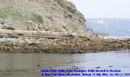 Middle White Oolite descends to the shore at Bran Point, Osmington Mills, Dorset