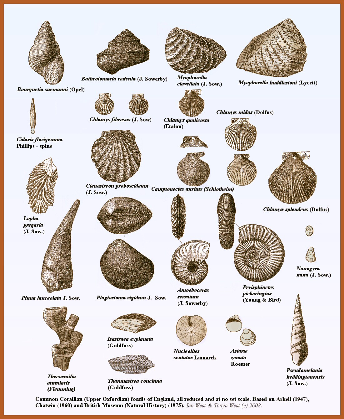 Common Fossils Of The Clian Group At Osmington Mills Dorset And Elsewhere