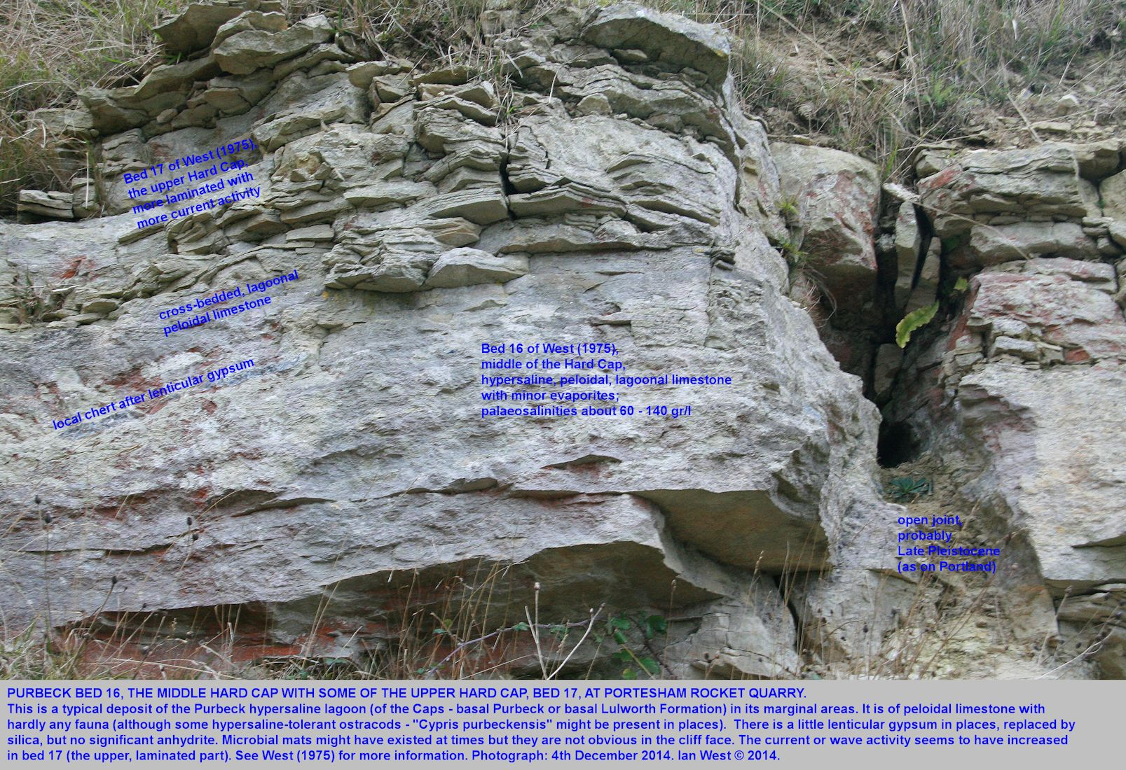 Cross-bedding and other features of the Hard Cap, Basal Purbeck (Basal Lulworth Formation) at Portesham Quarry, Dorset, 4th December 2014