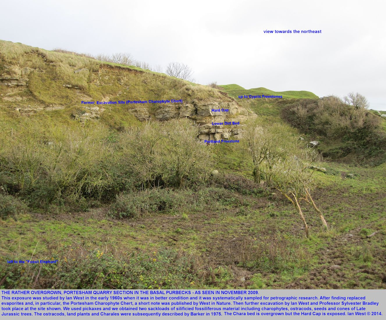 A broad introductory view of Portesham Quarry, Dorset, in Portland and Purbeck strata, as seen in November 2009, when much degraded and grassed over