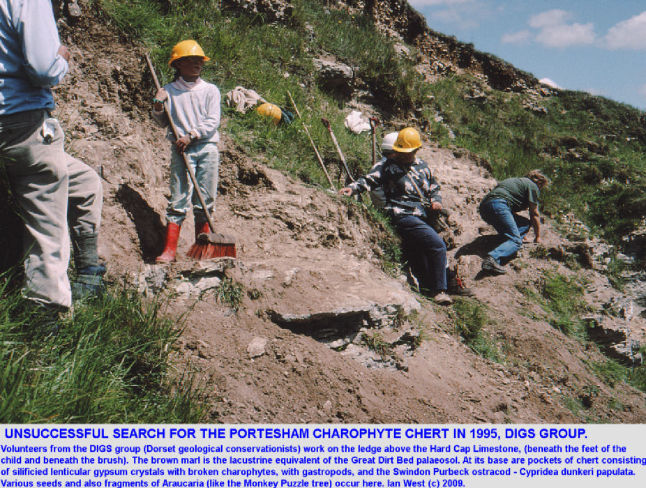 Excavation of the overlying marl in an attempt to expose the Portesham Charophyte Chert at Portesham Rocket Quarry, Dorset, in 1995