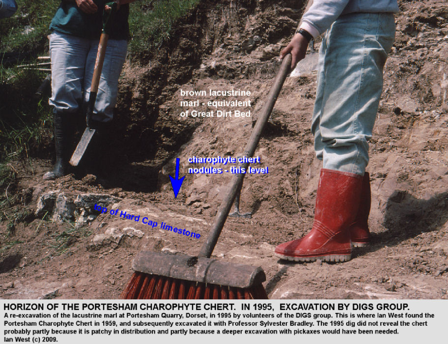 Details of excavation of the marl which contains the Portesham Charophyte Chert at Portesham Rocket Quarry, Dorset, in 1995
