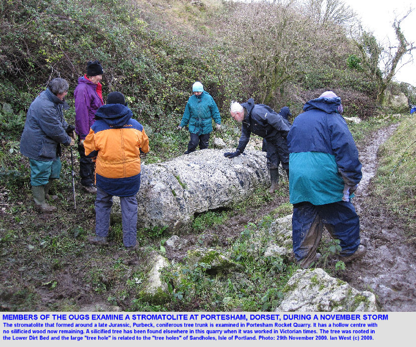 Members of the Open University Geological Society examine a thrombolite originally around a coniferous tree, Portesham Quarry, Dorset, during the storm of the 29th November 2009