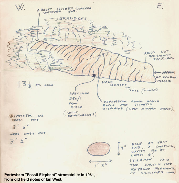 The cylindrical thrombolite in Portesham Quarry, Dorset, as recorded in old field notes of 1961 by Ian West