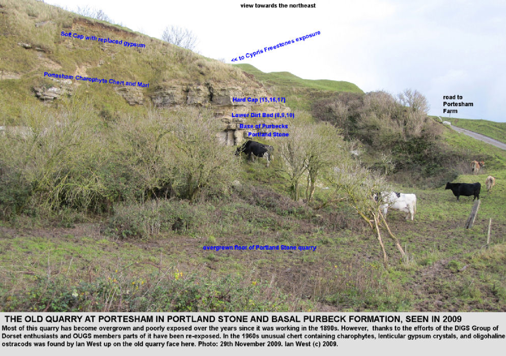 A general view of the the Portesham Rocket Quarry, Dorset, with exposures of Portland and basal Purbeck strata, 2009