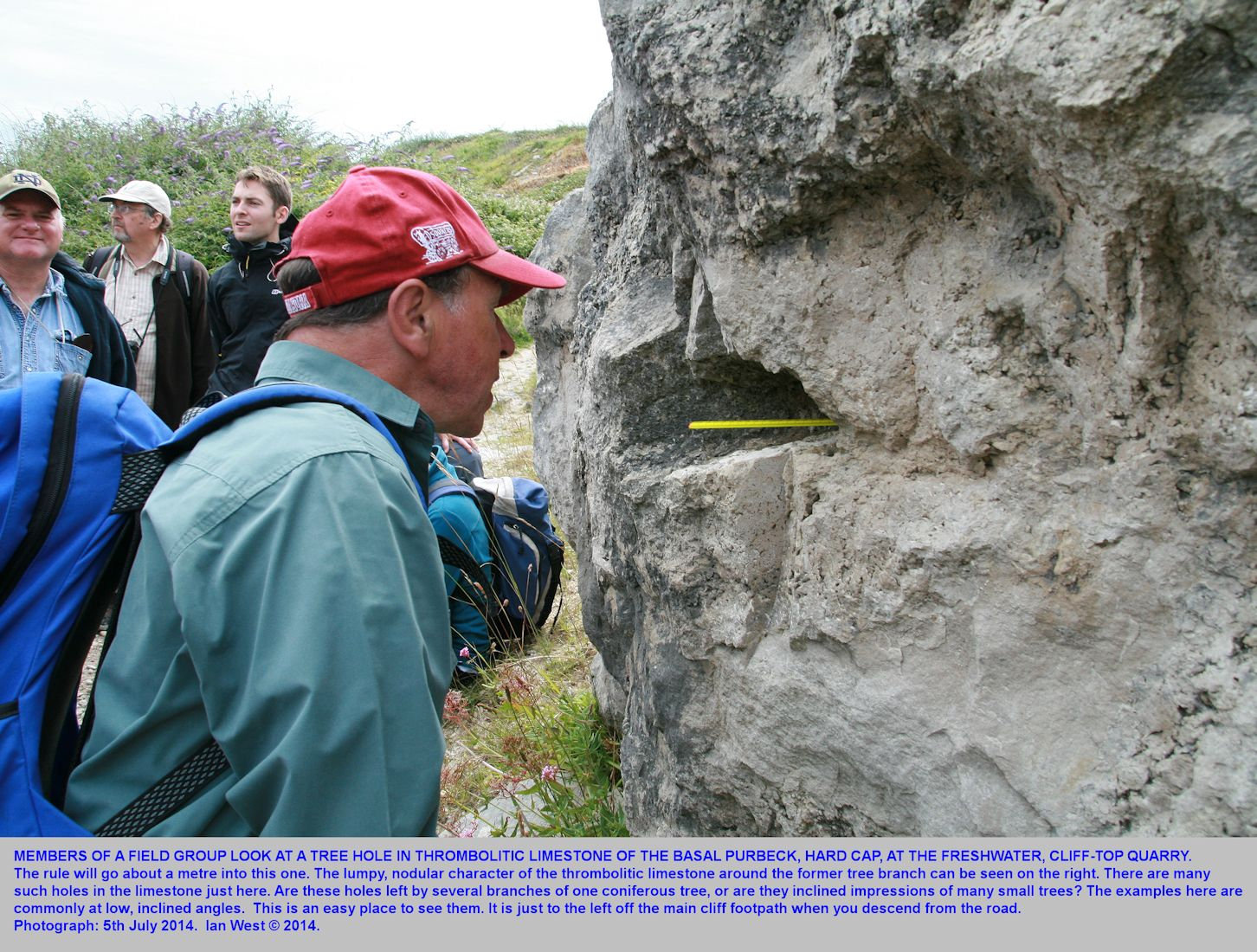 A field party of the OUGS examines moulds left by fossil tree branches in thrombolitic limestone of the Hard Cap, in a small quarry above Freshwater Bay, Isle of Portland, Dorset, 5th July 2014