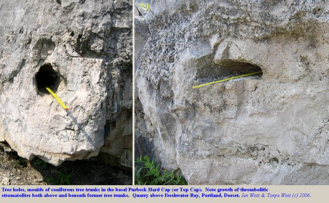 Geology of the Purbeck Group, Jurassic - Cretaceous