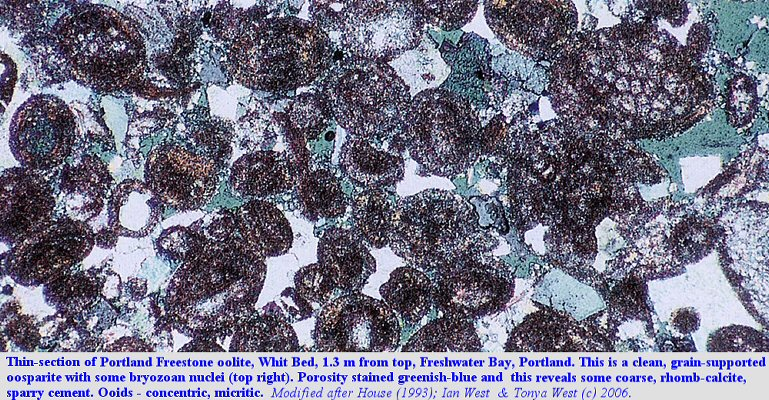 Thin-section of the Whit Bed oosparite from Freshwater Bay, Isle of Portland, Dorset