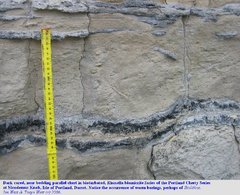 Bioturbated Rhaxella biomicrite, with chert, of the Cherty Series, Nicodemus Knob, Isle of Portland, Dorset