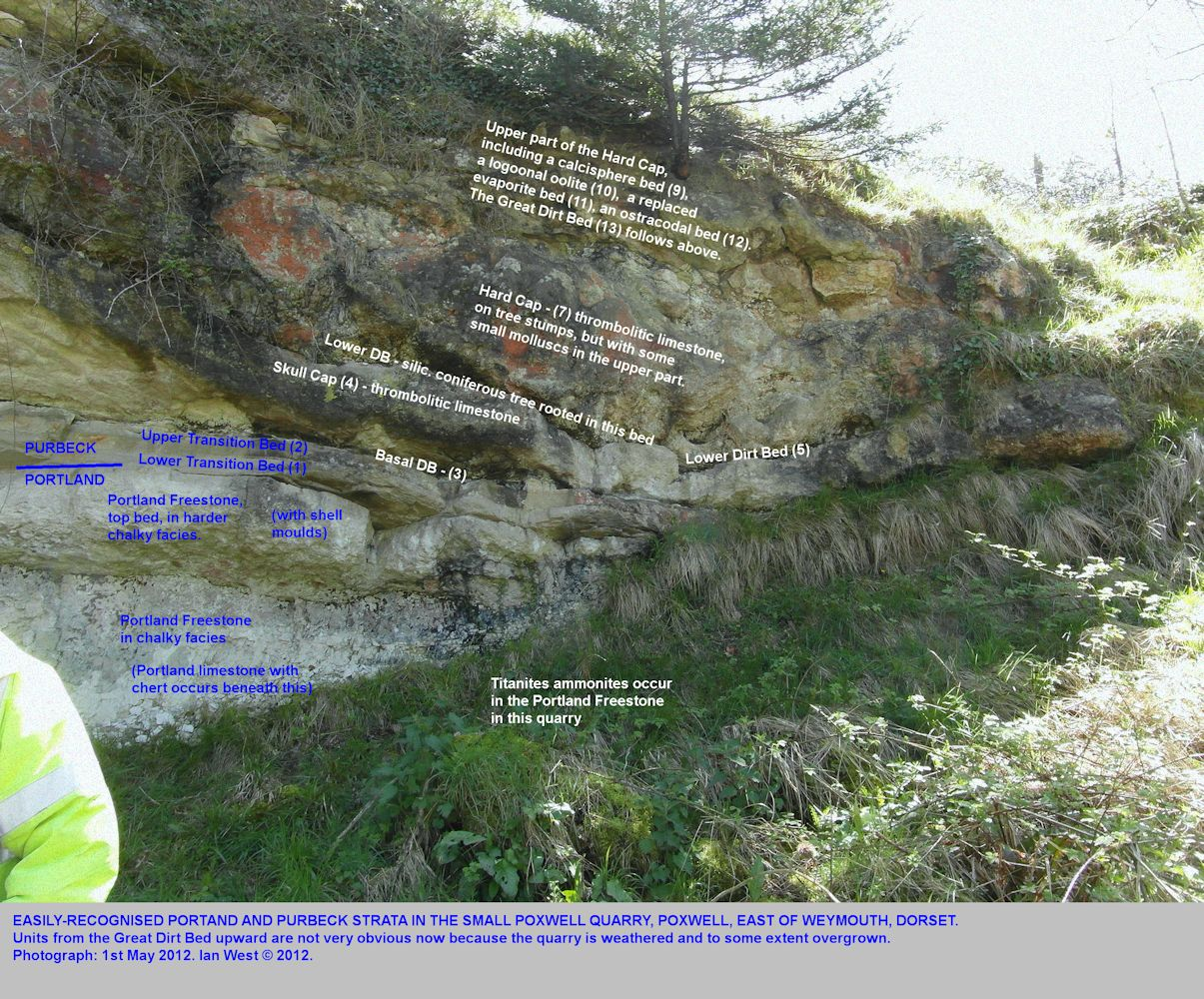 Some details of the Purbeck sequence at Poxwell Quarry, Dorset, May 2012