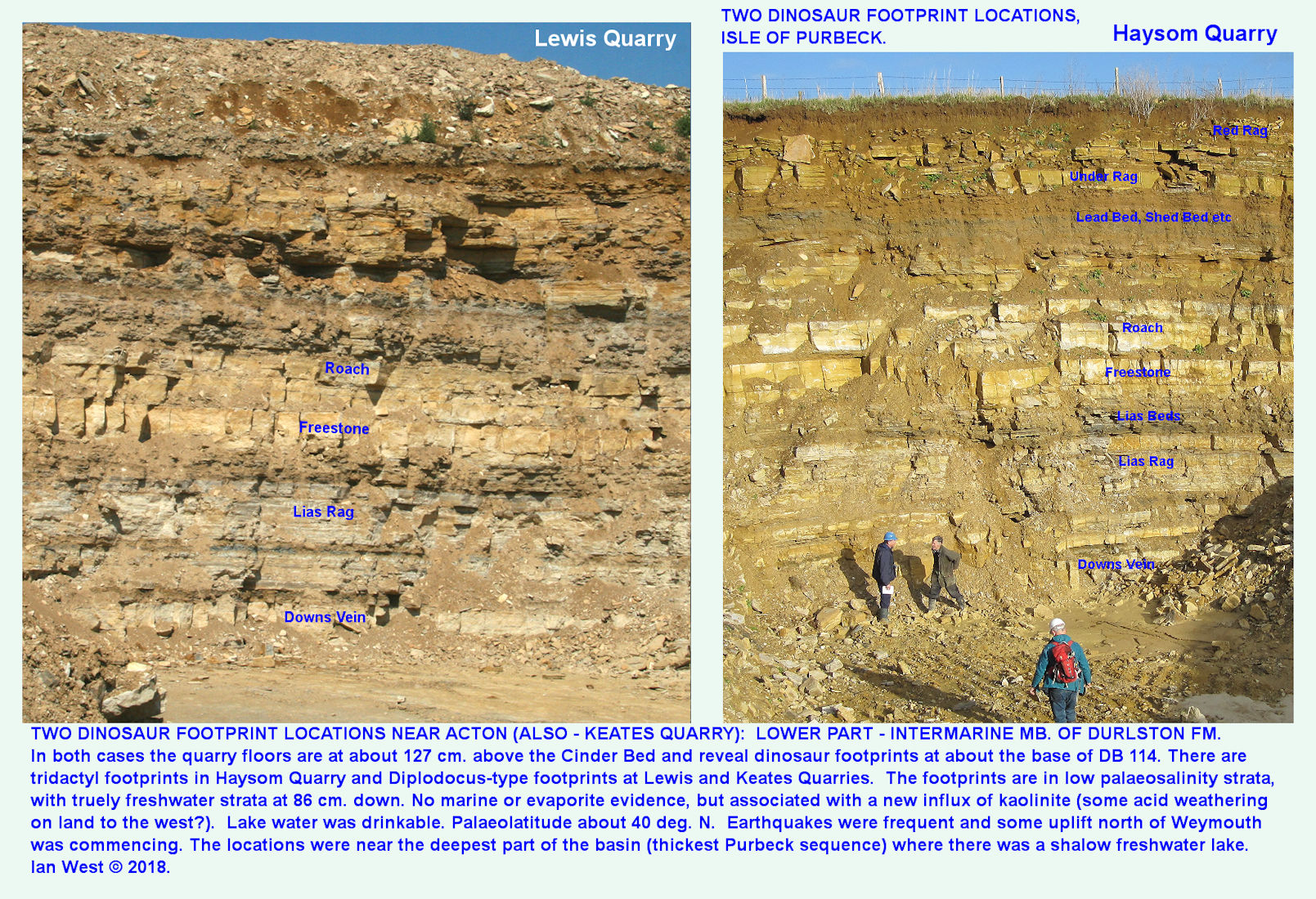 A similar Durlston Formation, upper part of Middle Purbeck, at Lewis Quarry and at Haysom's Quarry near Acton, west of Swanage, Dorset, both showing an almost identical sequence of the lower part of the Intermarine Member