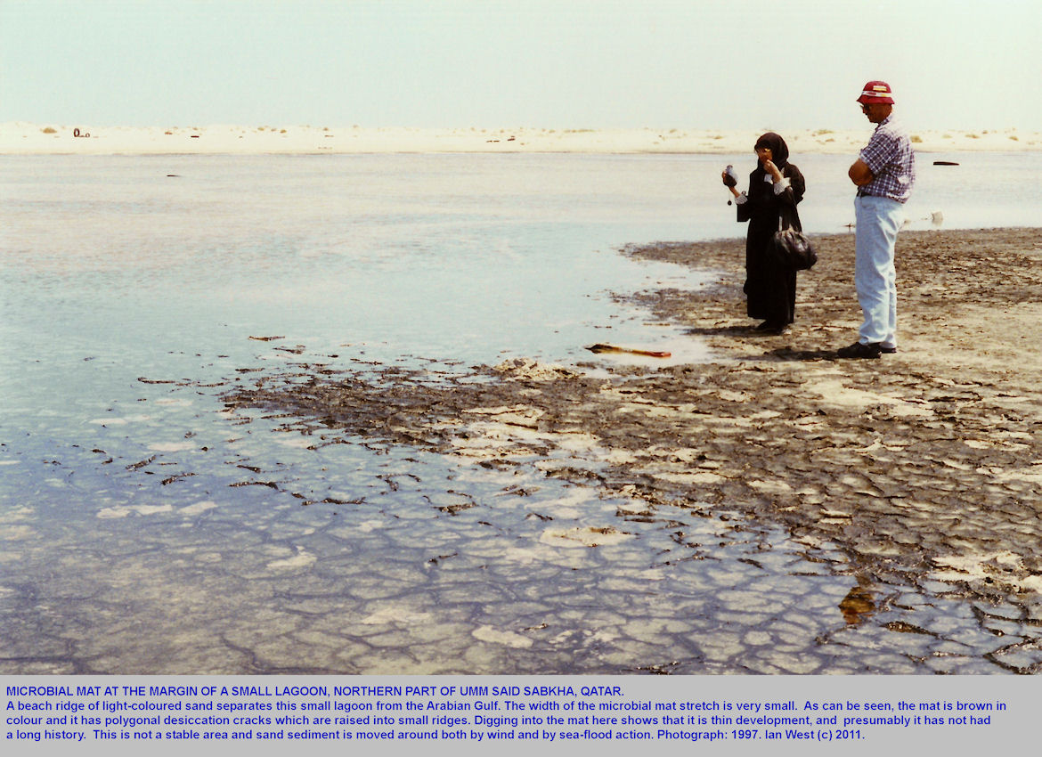 Microbial mats at the margin of a small lagoon, northern part of Umm Said, Sabkha, Qatar