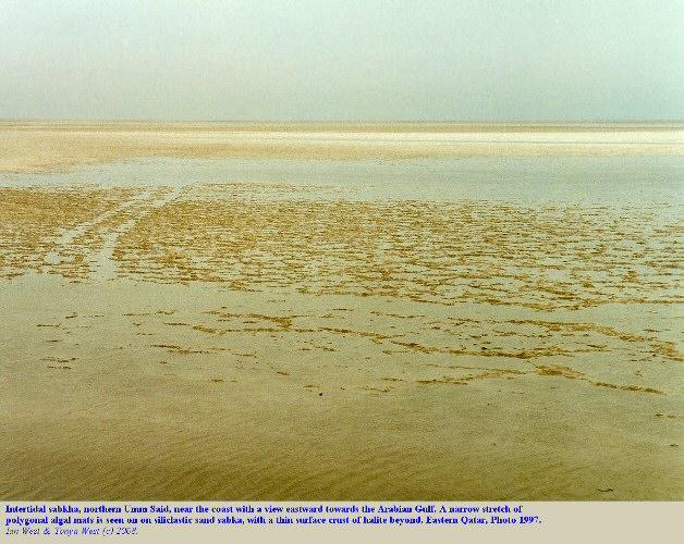 A narrow zone of polygonally cracked, microbial mats, intertidal zone, Umm Said, Sabkha, Qatar