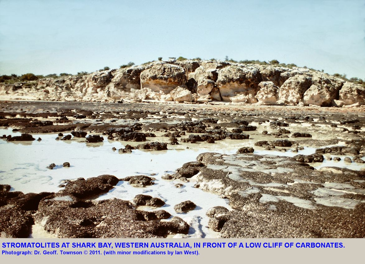 Stromatolites at Shark Bay, Western Australia, with a low cliff behind, in a photograph taken by Dr. Geoff Townson in 1981