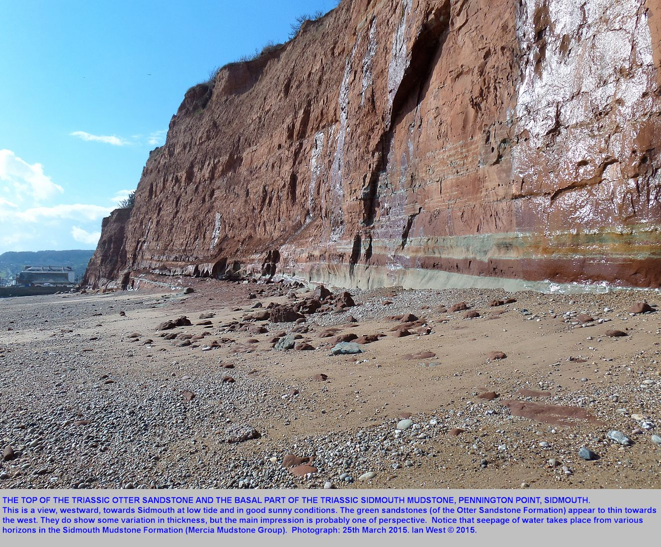 Sandstones in the cliff at Pennington Point, seen when looking westward towards Sidmouth, Devon, by Ian West, 25th March 2015
