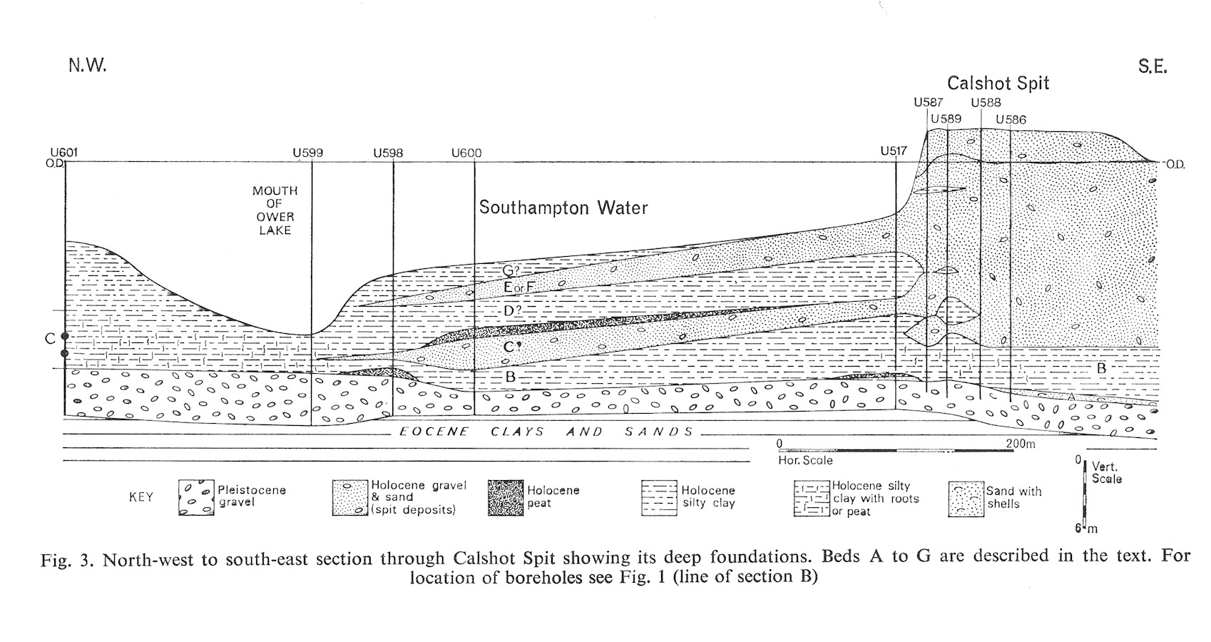 A NW - SE section through the Holocene deposits of Calshot Spit, Solent Estuaries, southern England