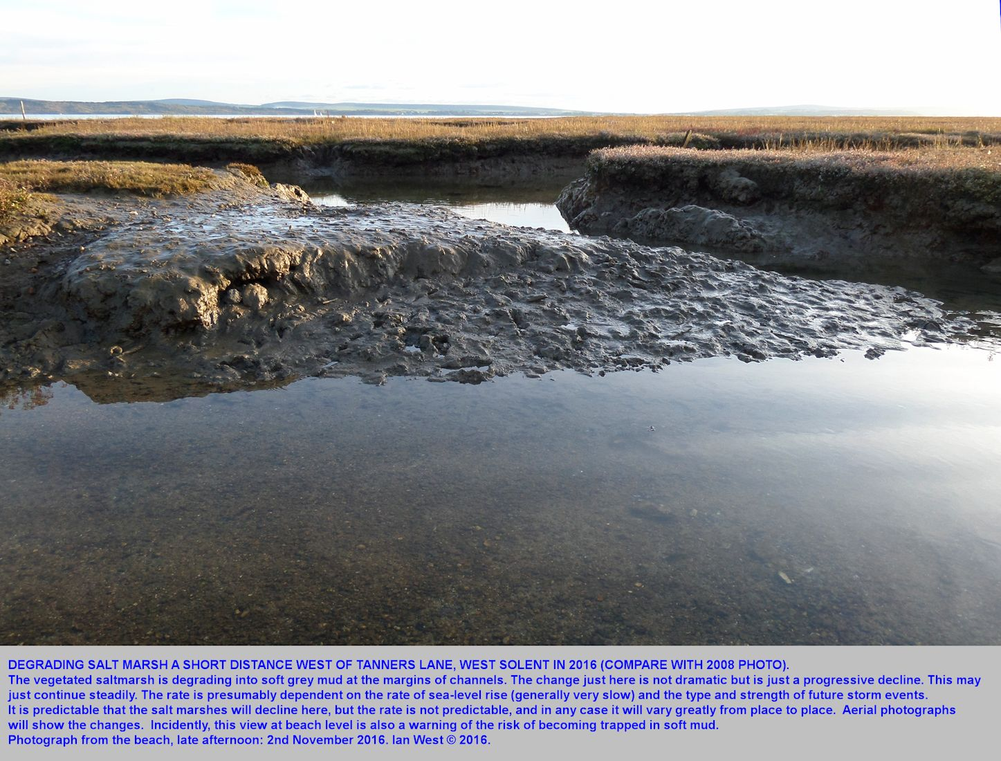 Parts of saltmarshes where the Spartina has died back and erosion is occurring, shore just to the west of Tanners Lane, West Solent, southern England, 2nd November 2016, compare with 2008 photograph of this locality with a topple