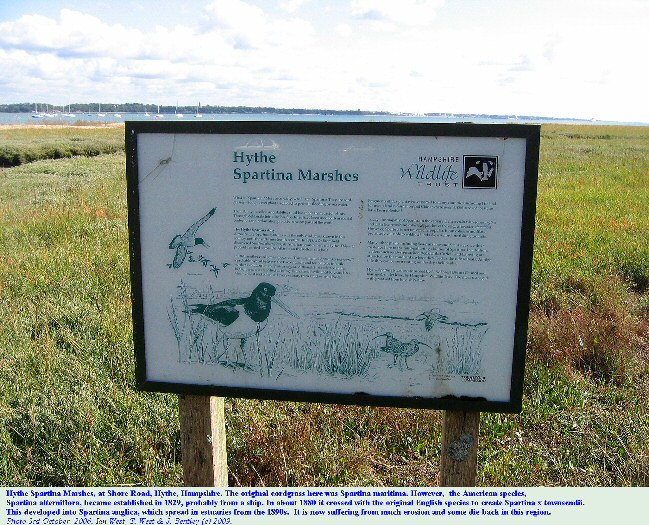 Hythe Spartina Marshes, Hythe, Southampton Water, southern England