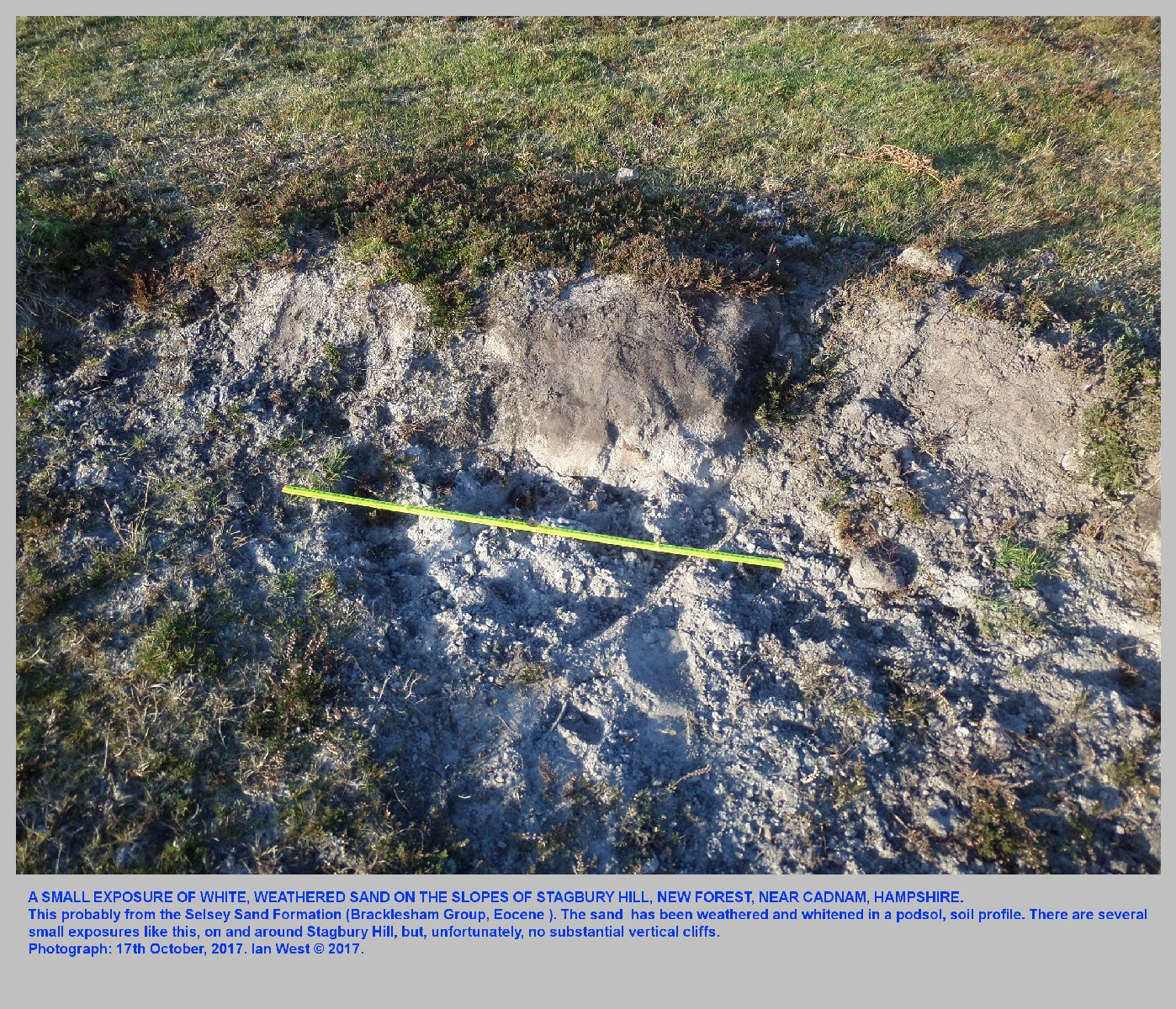 A small exposure of the sand of the Selsey Formation at Stagbury Hill, near Cadnam, New Forest
