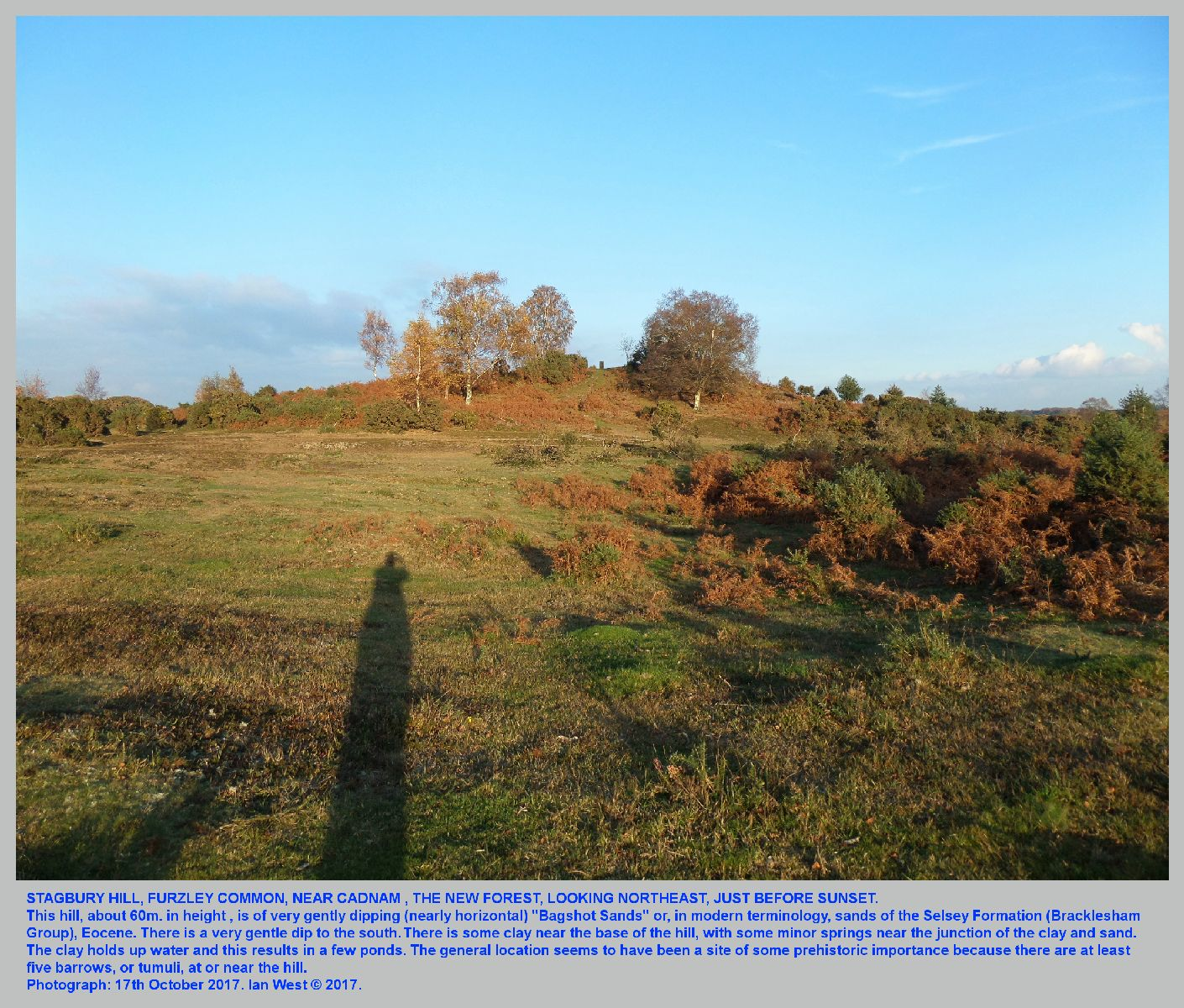 Stagbury Hill, near Cadnam, in the area of the New Forest National Park, the hill consisting mainly of Eocene Sand, probably of the Selsey Formation