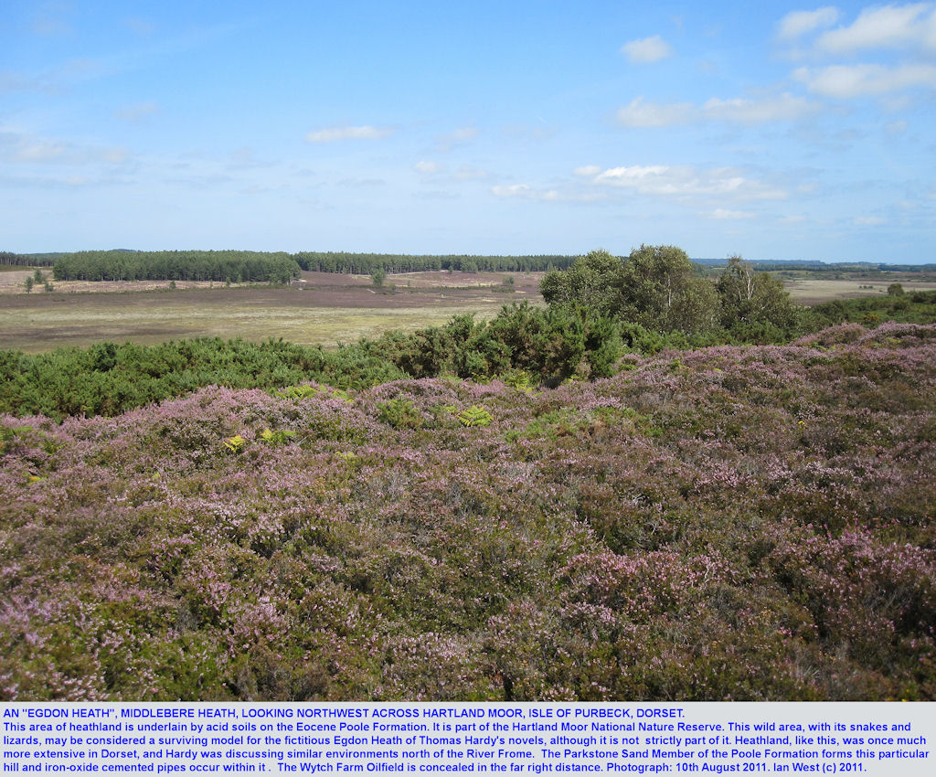 Egdon Heath type of country - Middlebere Heath and Hartland Moor, on Eocene Poole Formation, near Wareham, Dorset