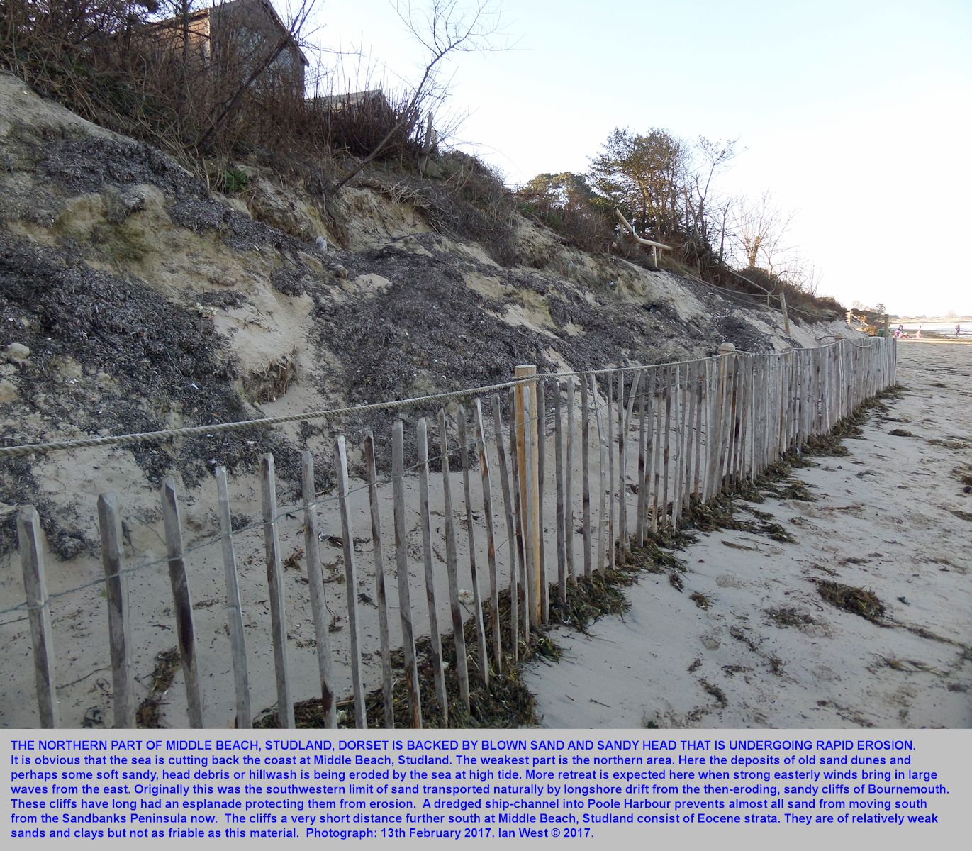 A very weak cliff of sand and sandy head at the northern end of Middle Beach, Studland, Dorset, is being rapidly eroded, as shown in February 2017