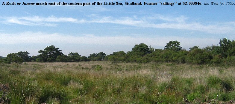 A rush marsh or bog with Juncus, between the Inner Ridge and First Ridge, South Haven Peninsula, Studland, Dorset