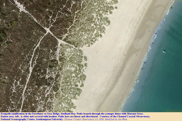 Ramification of paths in the Foredunes or Zero Ridge, Studland Bay, Dorset, aerial photograph,courtesy of the Channel Coastal Observatory