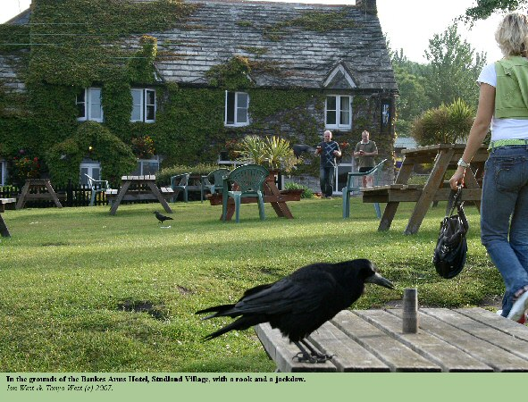 The grounds of the Bankes Arms  Studland, Dorset, with a rook and a jackdaw