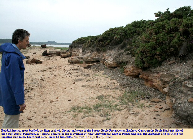 Low cliffs of iron-cemented sandstone of the Poole Formation, Redhorn Point, Poole Harbour, Studland, Dorset