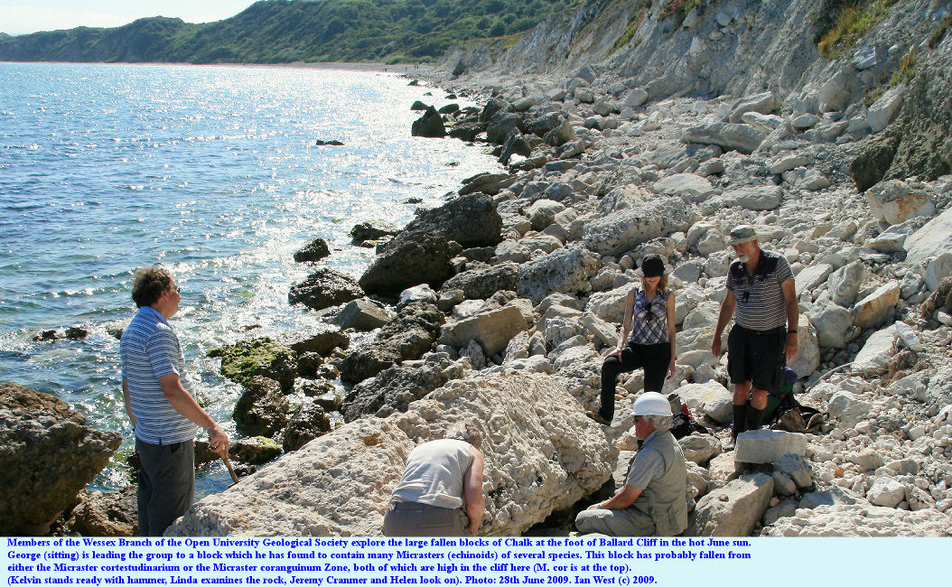 Examining fallen blocks of Chalk for fossils at the foot of Ballard Cliff, Swanage, Dorset, 27th June 2009