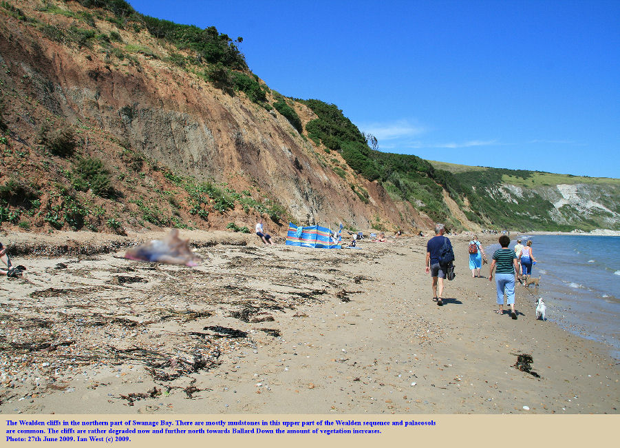 The upper part of the Wealden succession, mostly mudstones, is seen in the cliffs of the northern part of Swanage Bay, Dorset, 2009