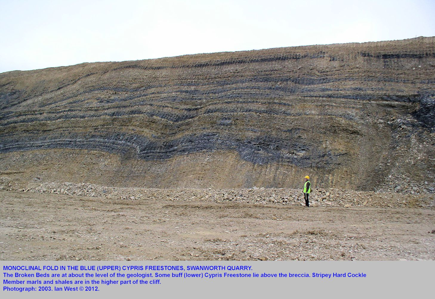 A monoclinal fold in the Blue Cypris Freestones, above the Broken Beds, Swanworth Quarry, 2003
