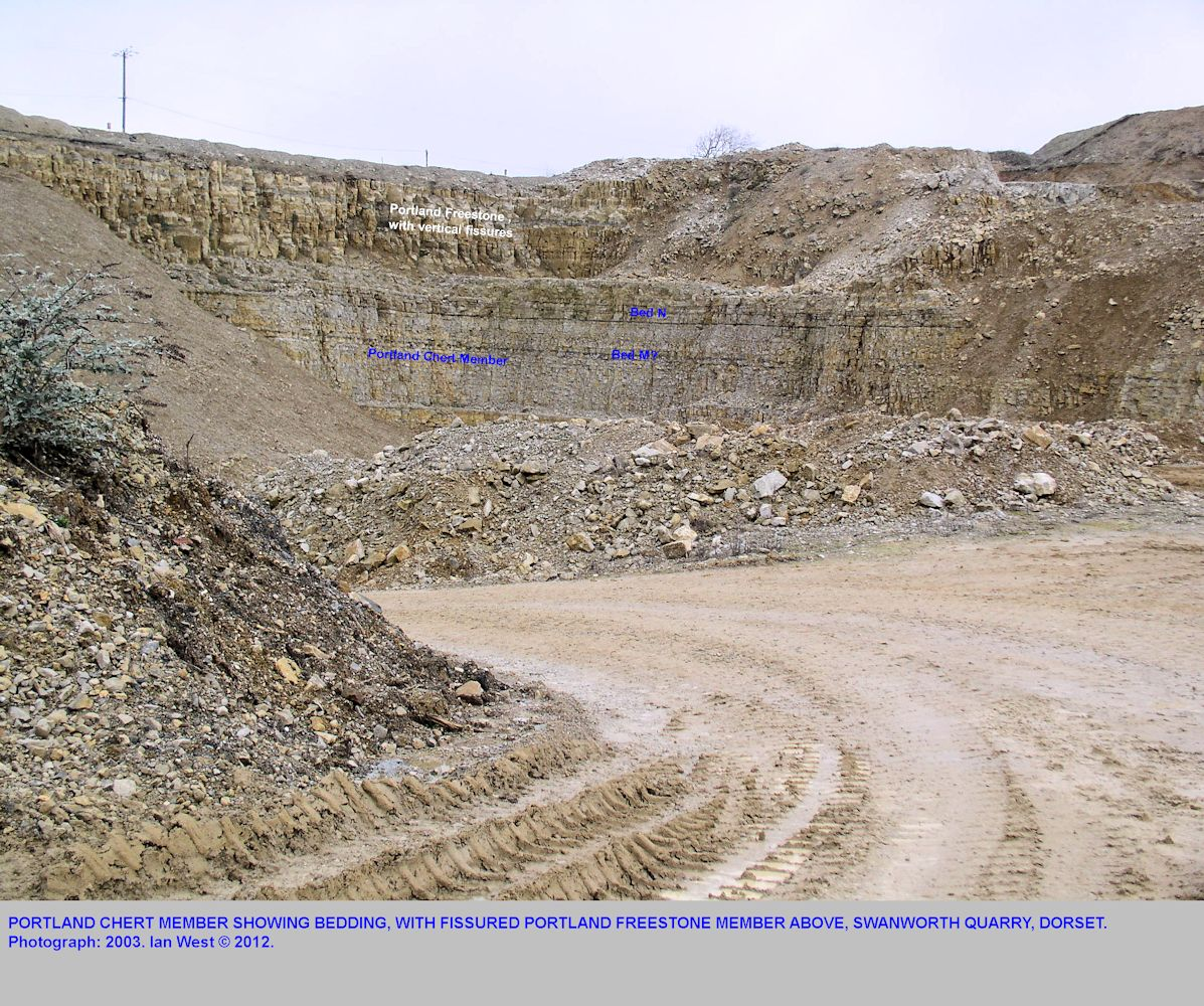 A face of Portland Chert Member, Portland Stone Formation, Swanworth Quarry, with the Portland Freestone Member, more fractured, and in the upper cliff, 2003