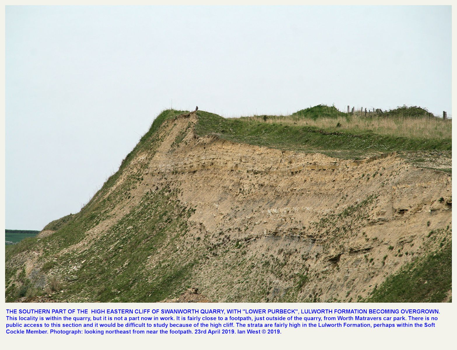 A promontory of nearly horizontal Purbeck strata up through the Cypris Freestones at the southern part of the eastern wall of Swanworth Quarry, as seen on the 23rd April 2019
